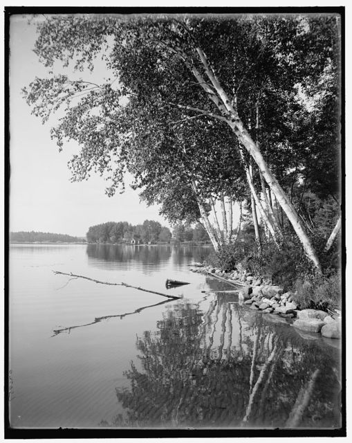 [Upper Saranac Lake, along the shore, Adirondacks, N.Y.]