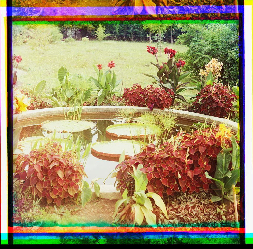 Victoria regia. Pervyĭ raz v Evropi︠e︡ vyvedena na vozdukhi︠e︡. Posazhena v ii︠u︡ni︠e︡ 1912 g. Botanich. sad v Sukhumi︠e︡