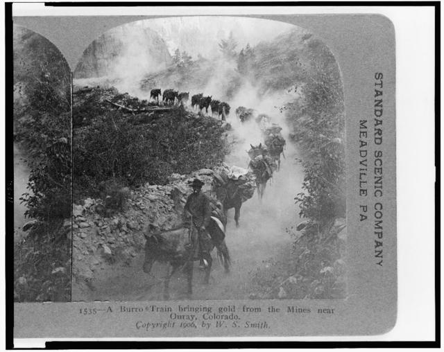 A burro train bringing gold from the mines near Ouray, Colorado