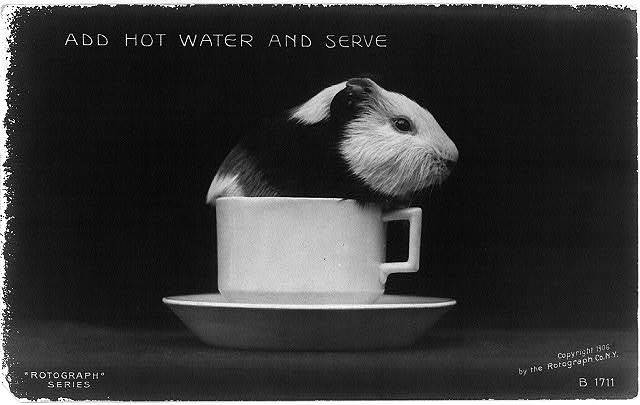 Add hot water and serve