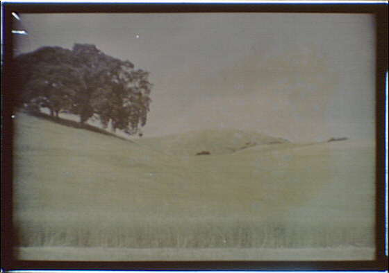 California landscape of grass-covered hills and a large tree