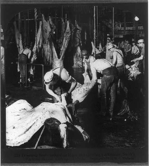 Chicago - Meat Packing Industry: dressing beef, removing hides and splitting backbones, Swift's Packing House