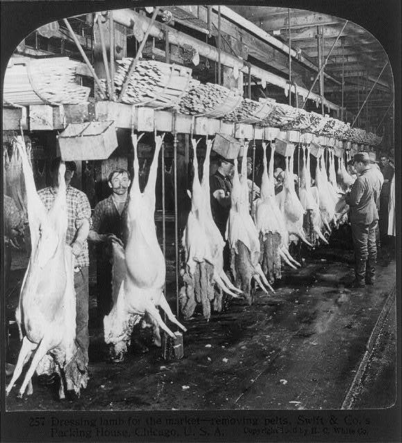 Chicago - Meat Packing Industry - Swift & Co.'s Packing House: dressing lamb for the market, removing the pelts