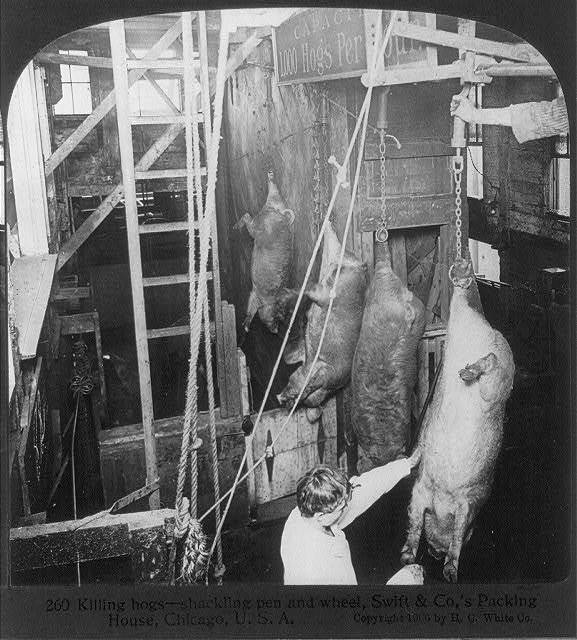 Chicago - Meat Packing Industry - Swift & Co.'s Packing House: killing hogs, shackling pen and wheel