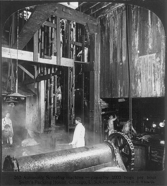Chicago - Meat Packing Industry - Swift's Packing House: automatic scraping machine (capacity 1000 hogs per hour)