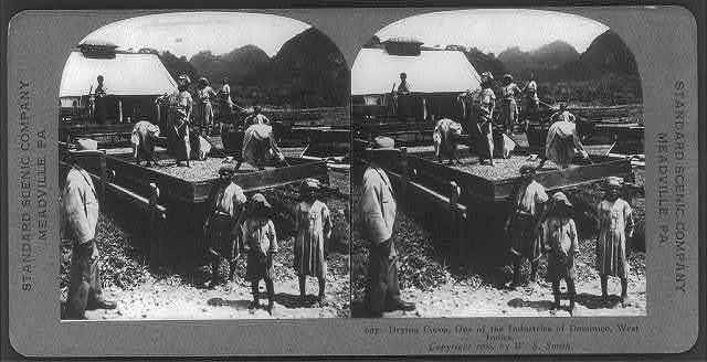 Drying cocoa, one of the industries of Dominica, [British] West Indies [one of the Windward Islands]