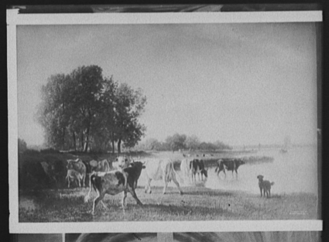 [Holland cattle]