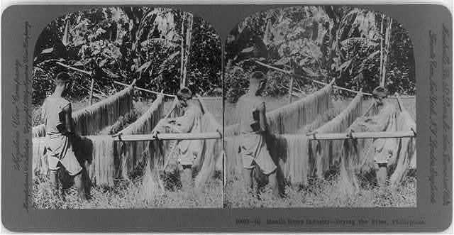 Manila hemp industry, Philippines: Drying the fiber