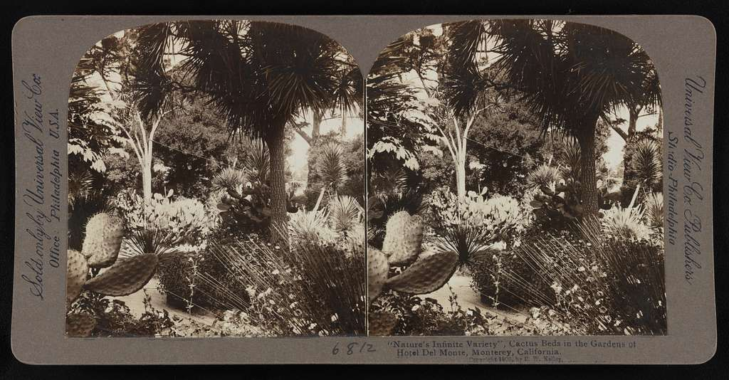 """""""Nature's Infinite Variety"""", Cactus Beds in the Gardens of Hotel Monte, Monterey, California"""