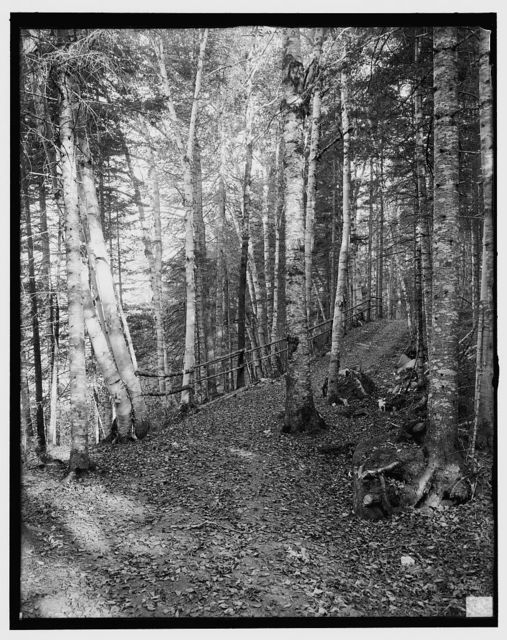 [On the Ammonoosuc bridle path, White Mountains, N.H.]