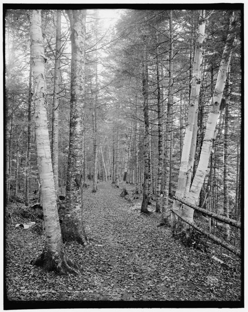 On the Ammonoosuc bridle path, White Mts., N.H.
