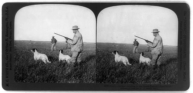Prairie chicken shooting in the South Dakota wheat fields
