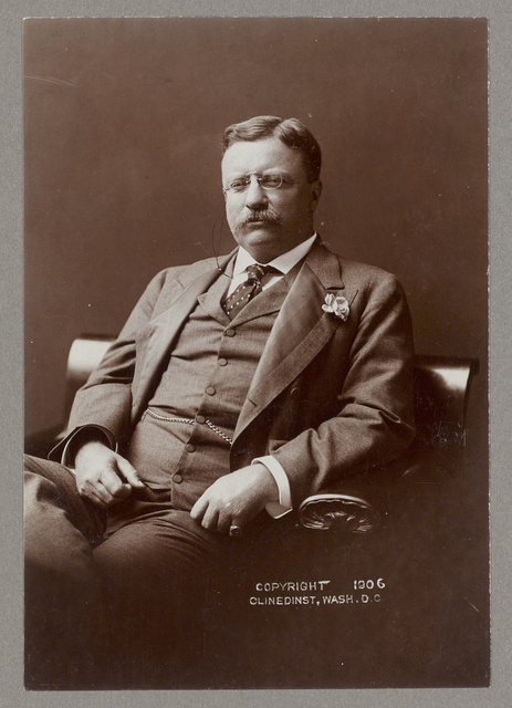 [Theodore Roosevelt, three quarter-length portrait, seated left, facing forward, wearing flower in lapel]