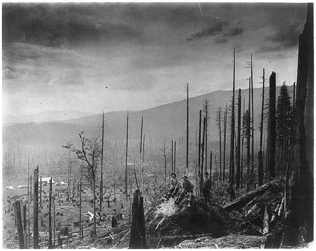[Three men in devastated forest - logging in the Cascade Mountains, near Seattle, Wash.]