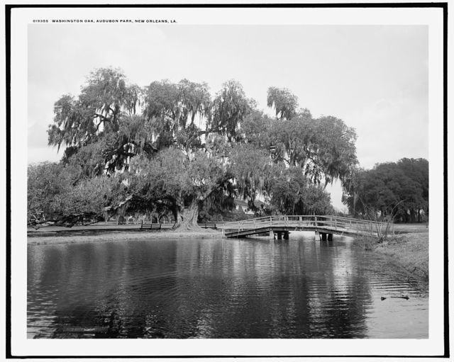 Washington Oak, Audubon Park, New Orleans, La.