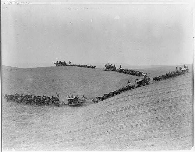 Combined harvesters in operation