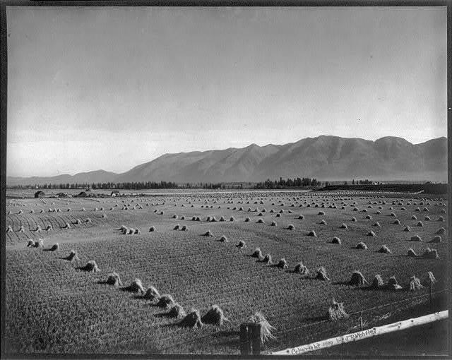[Harvest time, Flathead Valley, Montana]