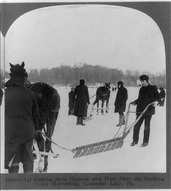 Ice harvesting, Conneaut Lake, Pa.: Cutting deep grooves with the plow after the marking