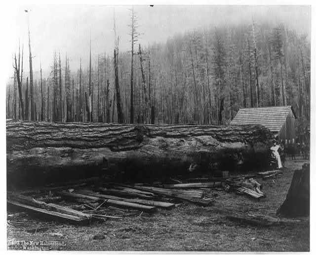Logging in Cascade Mtns.: The New Homestead, Washington
