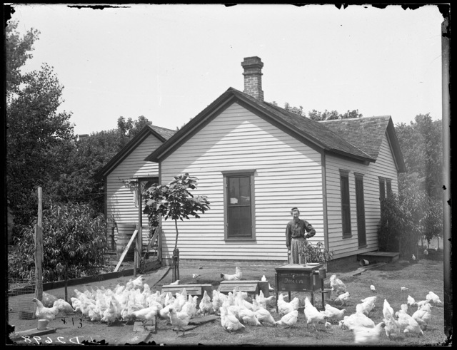 Mrs. Powers and her chickens in the yard of her house in Kearney, Nebraska.