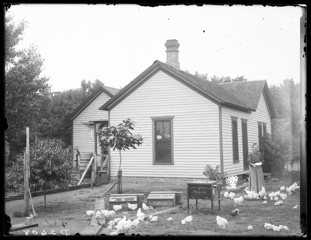 Mrs. Powers feeding chickens at her home in Kearney, Nebraska