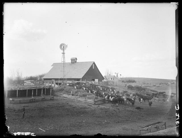 Peaden Stock Ranch, nine miles northeast of Cozad in the Platte Valley, Dawson County, Nebraska.