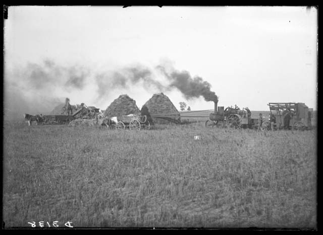 Threshing by steam engine in Buffalo County, Nebraska.