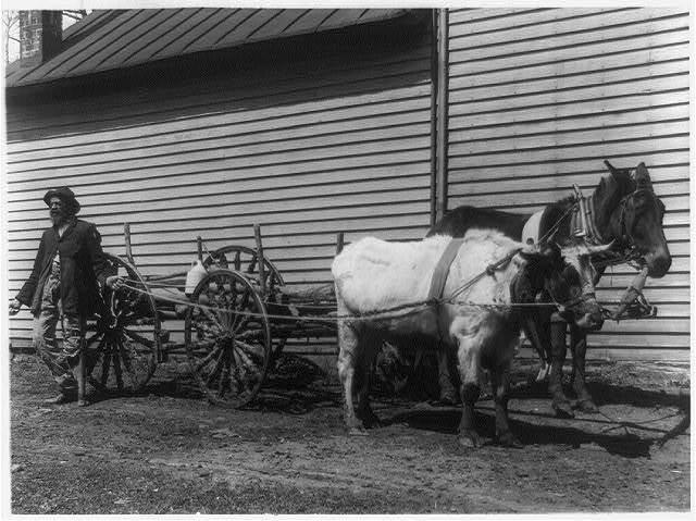 [African American man with steer and mule pulling wagon]