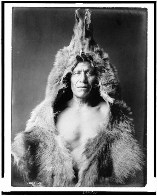 [Bear's Belly, Arikara Indian half-length portrait, facing front, wearing bearskin]