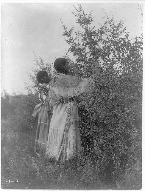 Buffalo berry gatherers--Mandan