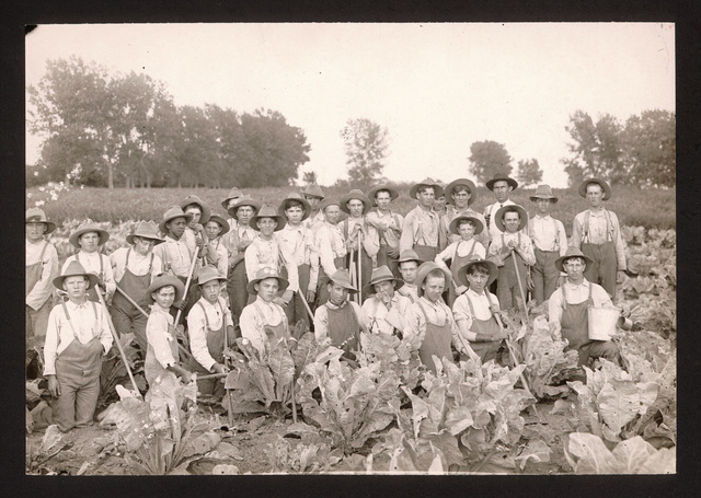 Cauliflower field, State Industrial School for Boys, Kearney, Nebraska
