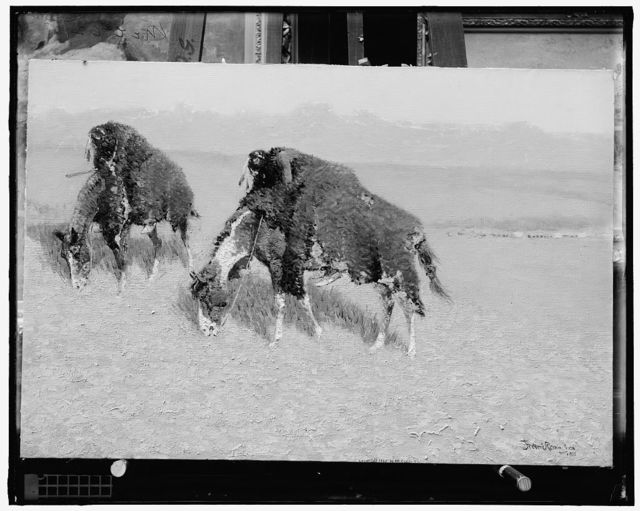 [Indians hunting bison on horses covered with bisonskins]