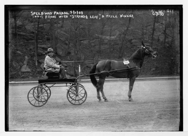 """Louis Frank with trotter """"Strange Leaf"""", prize winner, Speedway Parade"""