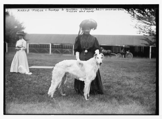 "Mineola [Dog Show], Marion C. Bourne with ""Michael Strogoff"" - best American-bred Russian Wolf Hound"