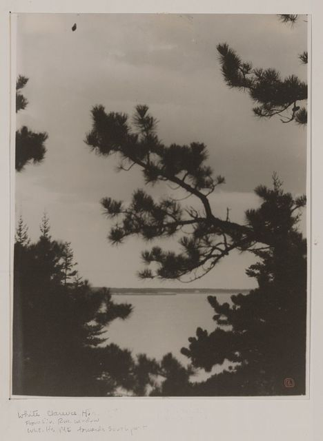 [Pine trees against the sky, Five Islands, Maine]