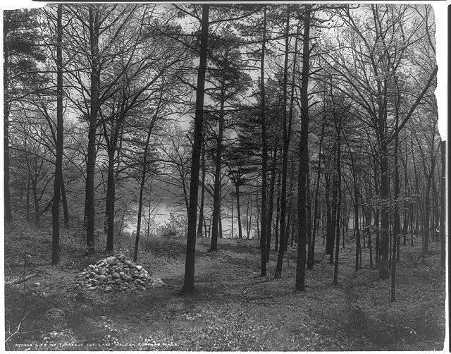 Site of Thoreau's hut, Lake Walden, Concord, Mass.