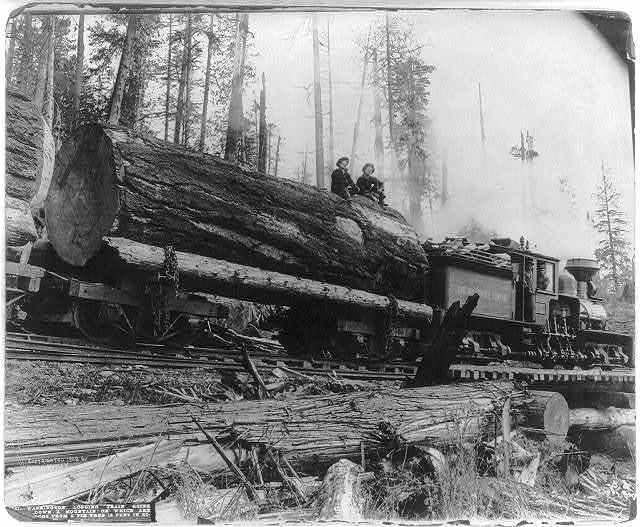 Washington logging train going down a mountain, on which are logs from a fir tree 12 feet in diameter