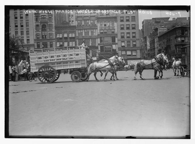 Work Horse Parade, [Borden Team], winner of obstacle test, [New York]