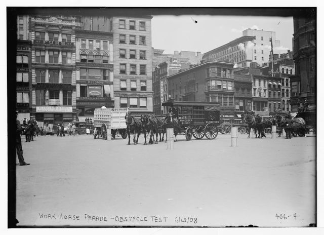 Work Horse Parade, [showing Anheuser Busch team], obstacle test, [New York]