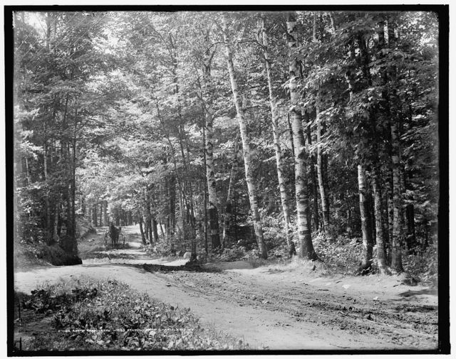 A Path through the woods, station road, Lake Placid, N.Y.
