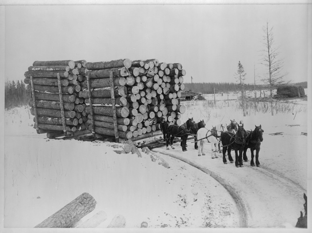 Banner load, Pine Island, Minn. Largest load of logs ever hauled on sleighs by horses / L.H. Halverson, photographer, Blackduck, Minn.