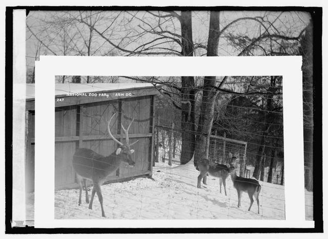 Deer, zoo