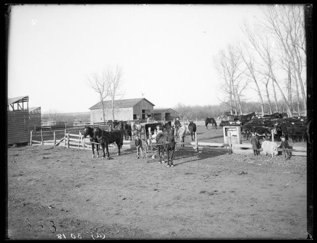 Farm of N. Freeze, Sumner, Nebraska.