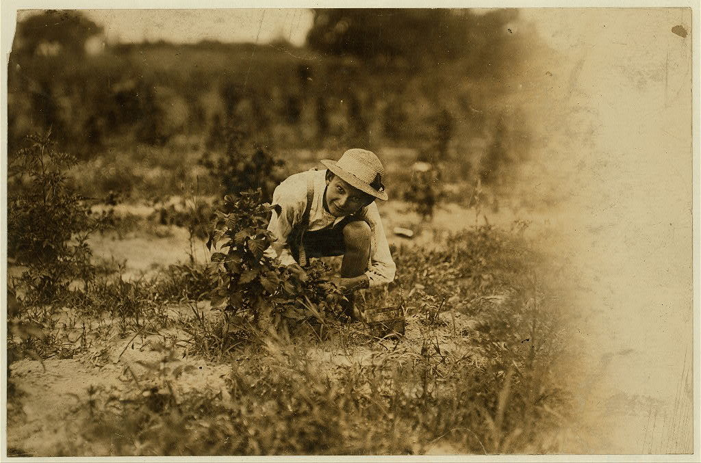 """Farrand Packing Co. A young berry picker on Curran's farm, Rock Creek. This boy, Irvan Stevans, and the other (see 828) were the only whites working with a large number of negroes that day, and bad language was abundant. Says he works from """"sunup to sundown"""" and has been working 3 summers. [On card with captions for both #827 and #828: Norris Lovitt. Been picking for 3 years in berry fields near Baltimore, Md. (See 827 and label). July 8, 1909.]  Location: Baltimore, Maryland."""