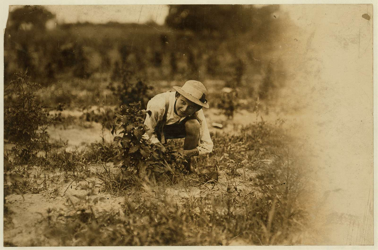 """Farrand Packing Co. A young berry picker on Curran's farm, Rock Creek. This boy, Irvan Stevans, and the other (see 828) were the only whites working with a large number of negroes that day, and bad language was abundant. Says he works from """"sunup to sundown"""" and has been working 3 summers. On card with captions for both #827 and #828: Norris Lovitt. Been picking for 3 years in berry fields near Baltimore, Md. (See 827 and label). July 8, 1909. Location: Baltimore, Maryland"""