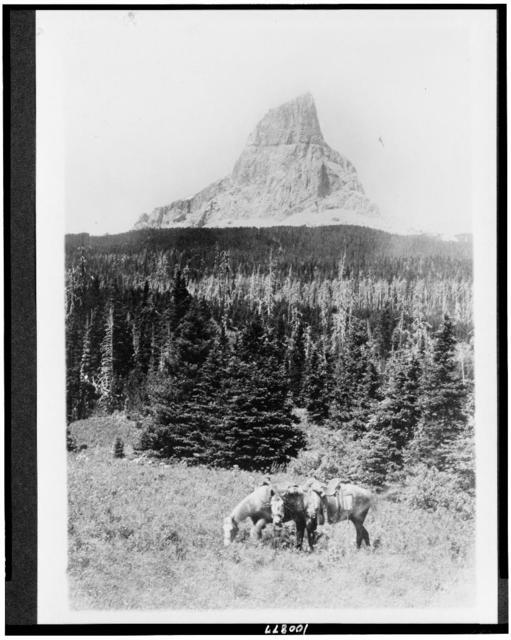 [Glacier National Park, Mountain. Chief Mountain from north fork of the Kennedy Creek Mountain. Two horses in foreground and mountain in background]