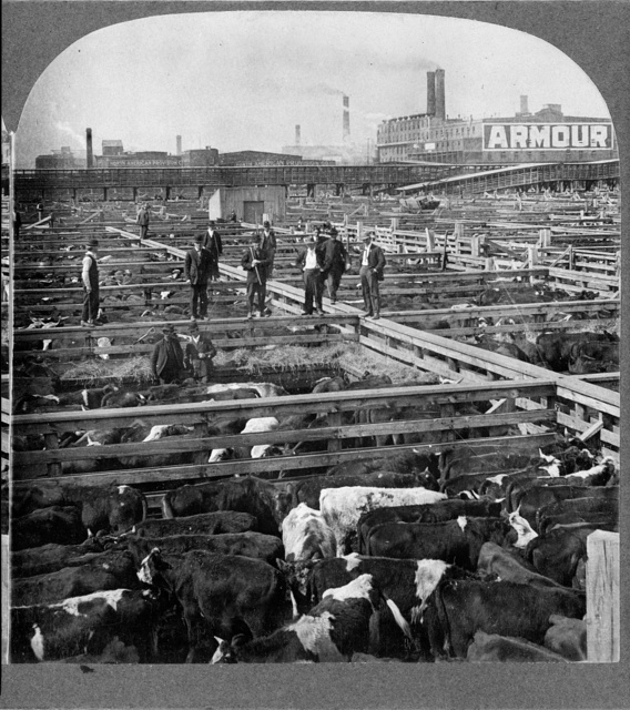 [In the heart of the Great Union Stock Yards, Chicago, U.S.A.]