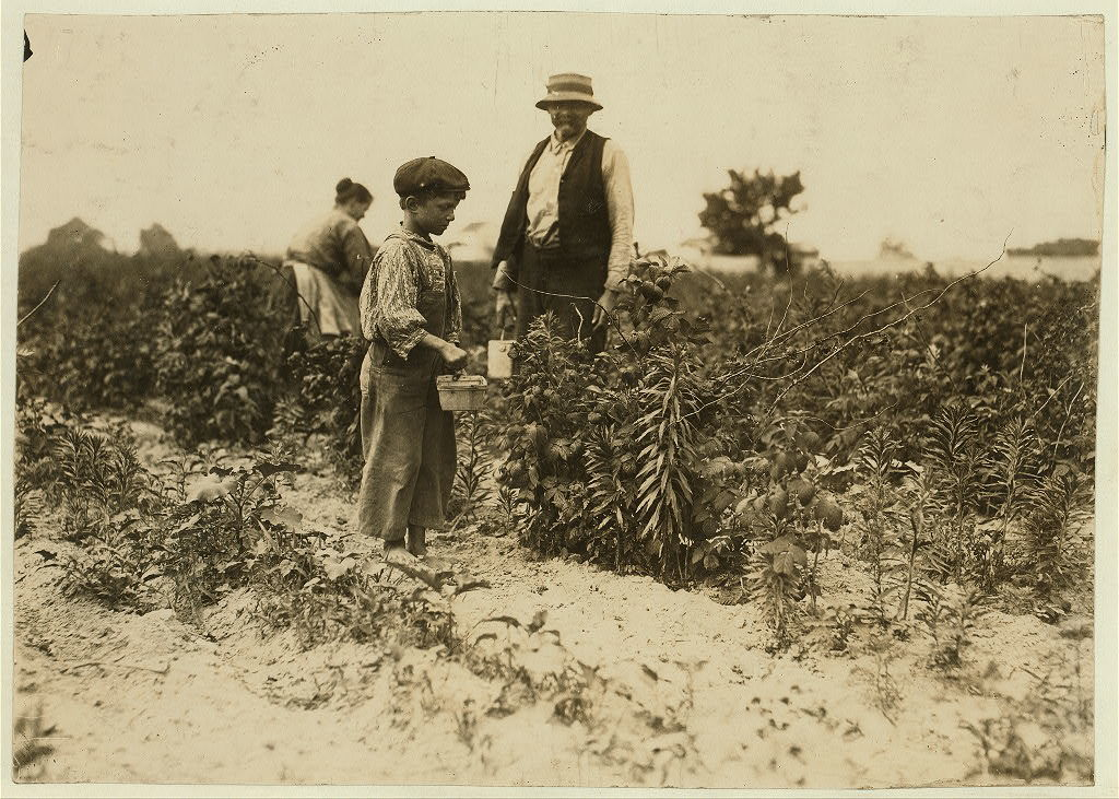 Johnnie Yellow, a young Polish berry picker on Bottomley farm, Rock Creek, near Baltimore, Md. Says he is 10 years old and has gone to Biloxi, Miss. for 9 years (with family) and has worked there in winter and here in summer for three years. He is stunted, being only about 39 inches high. Ma[n]y of these children are stunted.  Location: Baltimore, Maryland.