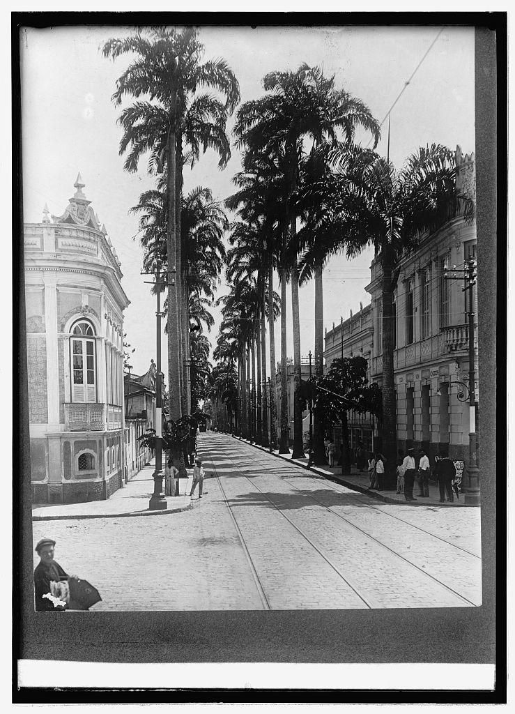 Palm Ave. Para, Brazil