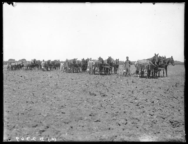 Plowing field of wheat on  Mr. Story's farm northeast Kearney, Buffalo County, Nebraska.